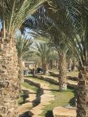Picknick in de Wadi
