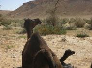 If we get stuck we still have Camel